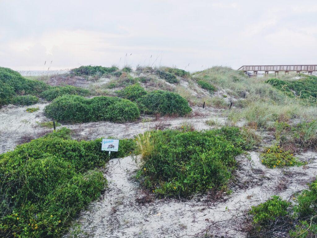 Dunes at the Ritz Carlton Amelia Island