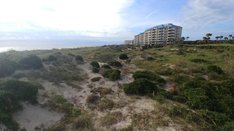 A healthy dune with native vegetation on Amelia Island