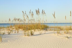 Sea oats and native plants help anchor sand dunes