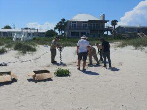 Dune Science Group native vegatation installation for homeowner dune restoration