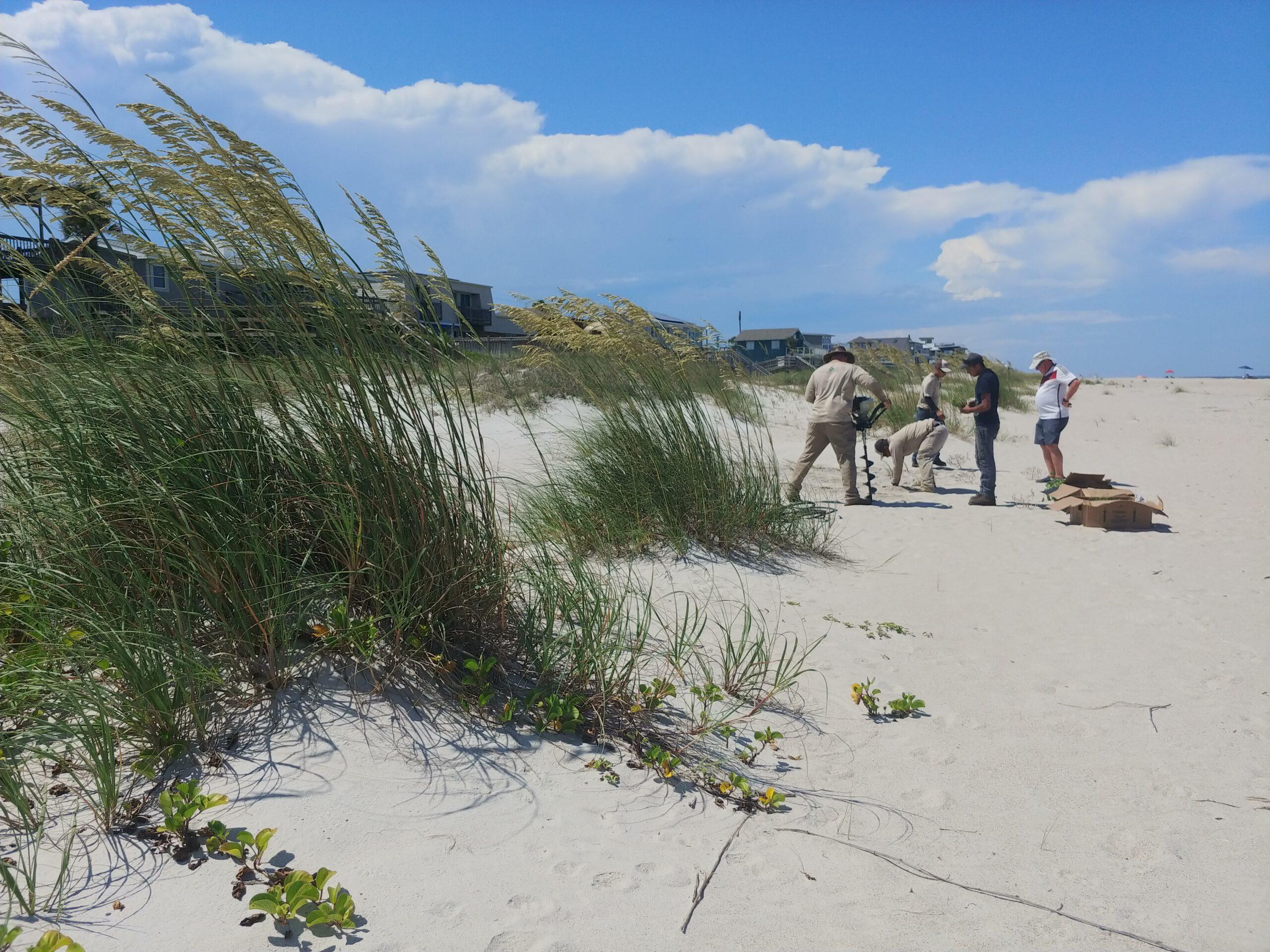 Dune Science Group native vegetation installation for homeowner dune restoration